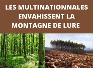 Balade à Seynes, forêt d'Ongles avec le Collectif Elzéard, Lure en résistance @ Seynes, Ongles