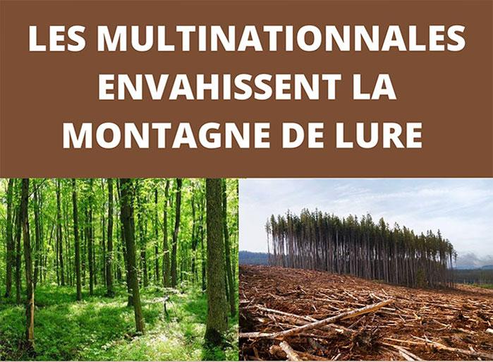 Balade à Seynes, forêt d'Ongles avec le Collectif Elzéard, Lure en résistance