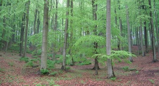 [tribune] La forêt est fragile – G. Rochet