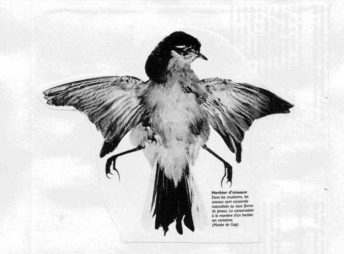 Exposition, rencontre et échange: Autour de L'herbier d'oiseaux