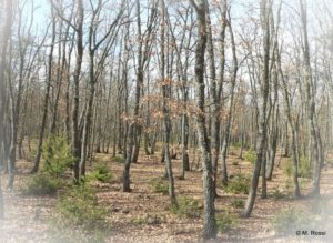 Rencontre CRPF taillis de chêne blanc @ Chateauneuf-Val-Saint-Donat