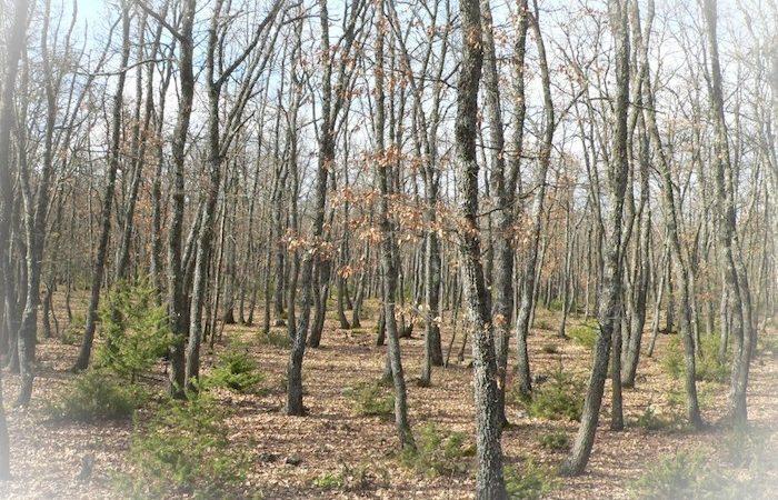 [info] Rencontre «Gestion du taillis de chêne blanc»