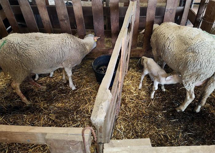 Nouveau-né et leur mère dans un enclos individuel